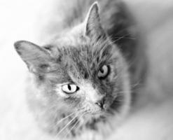 Grey cat looking towards camera above. photo