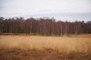 Moorlands near Neumünster / Germany