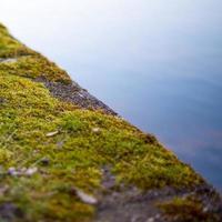 espuma de hierba foto