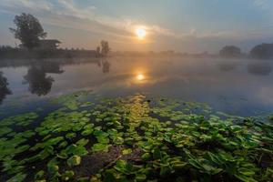 beautiful lilies on a lake
