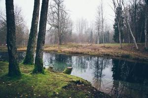 mañana clara por un pequeño lago con reflejos. película granulada retro