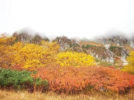 colorido en otoño, alpes centrales, nagano, japón