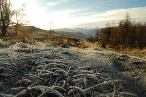 English Lake District: Frosty grass on winter's ay photo