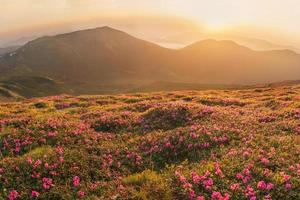 Beautiful mountain landscape with blossoming rhododendron flower