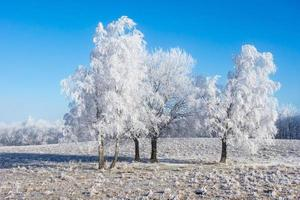 Tree Grove photo