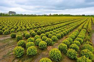 agricultura foto