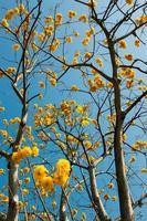 flor de supanika