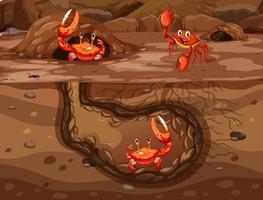 Agujero subterráneo de animales con muchos cangrejos.