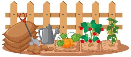 Vegetables growing in the garden on white background vector