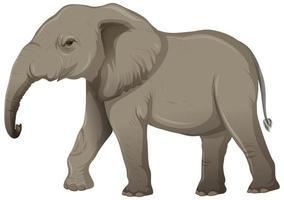 Elefante adulto sin marfil en estilo de dibujos animados sobre fondo blanco.
