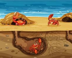 Underground animal hole with many crabs vector
