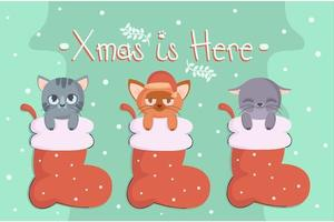 Christmas Cats in Stocking vector