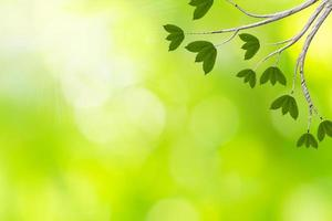 hojas verdes con fondo bokeh
