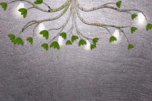 plantas verdes sobre fondo de cemento