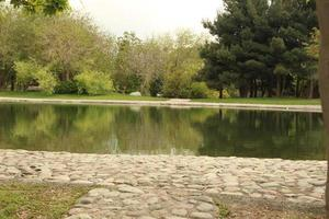 Pond in a park