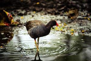 Bird walking through water