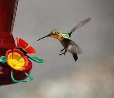 Hummingbird approaches nectar feeder