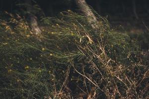 Woodland area of wildflowers