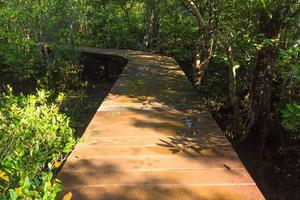 Wooden pathway in a forest photo