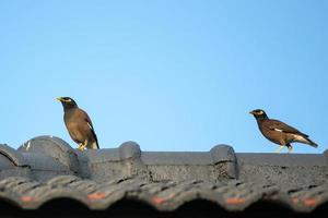 Two birds perched on a roof