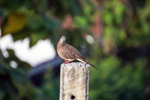 Pigeon perched on pole photo