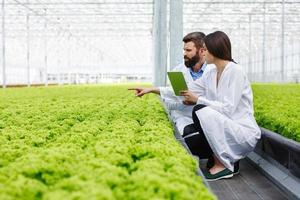 Two researchers in the green house