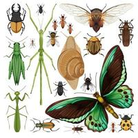 Set of different insects on white background