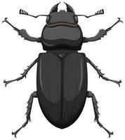 Escarabajo pelotero metálico aislado sobre fondo blanco.