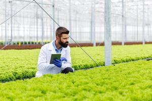 Researcher studying in the greenhouse
