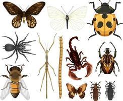 Colección de diferentes insectos aislado sobre fondo blanco. vector