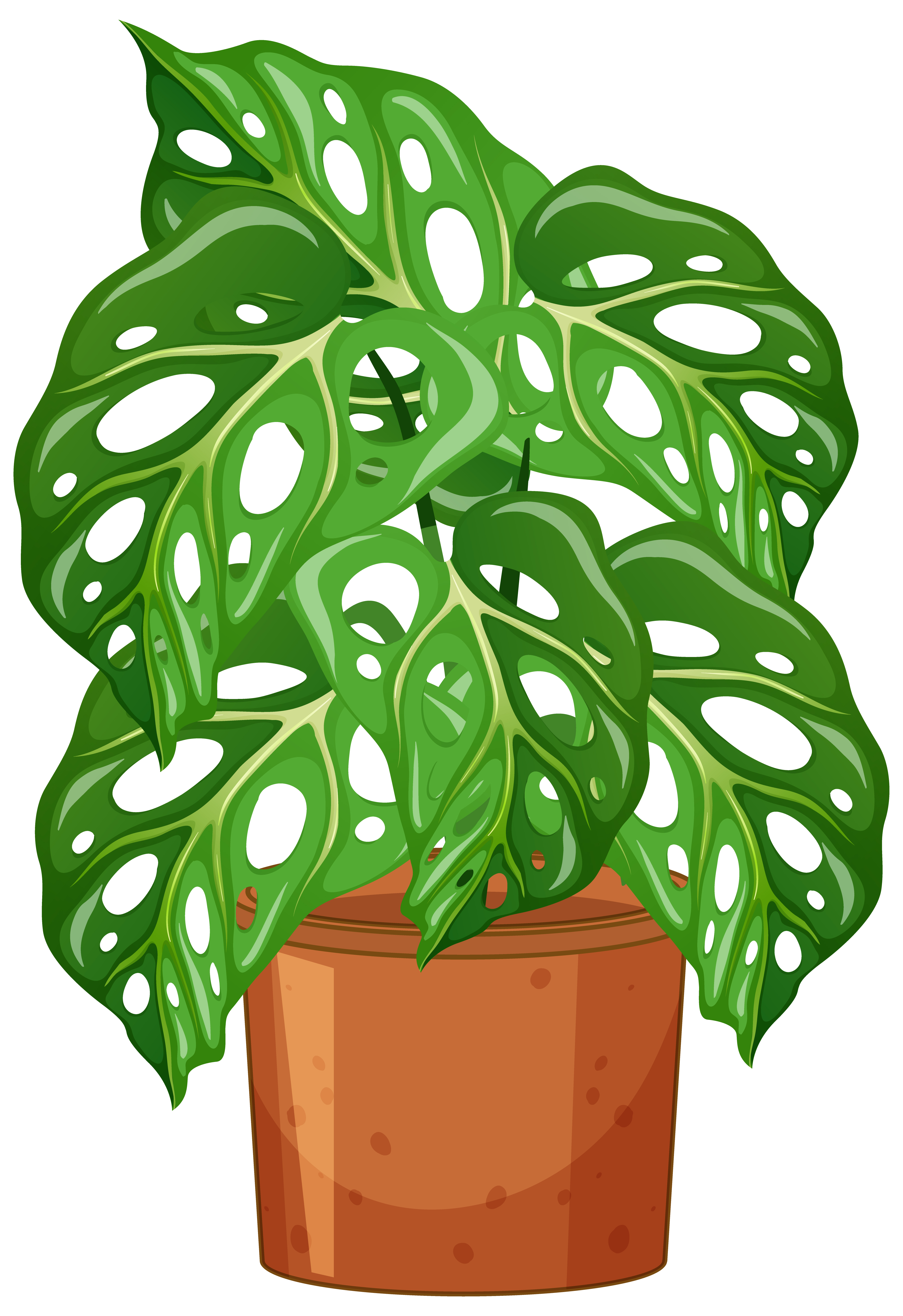 Monstera Plant In Pot Cartoon Style On White Background Download Free Vectors Clipart Graphics Vector Art Summer floral tree in pot for your design. vecteezy