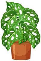 Planta monstera en maceta estilo de dibujos animados sobre fondo blanco.