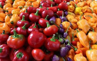 Assorted colorful bell peppers