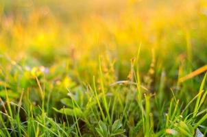 Nature background with grass at sunset