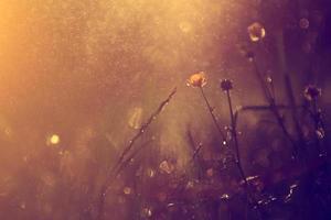 Vintage flower in rain