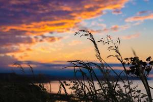 Grass blowing in the wind at sunset
