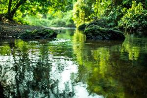 la vista verde con momento tranquilo