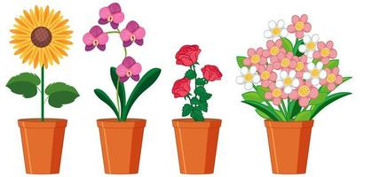 Beautiful flowers in pots on white background vector