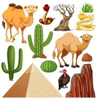 Set of cute desert animal and nature vector