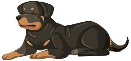 estilo de dibujos animados de rottweiler sobre fondo blanco vector