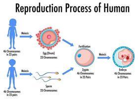 proceso de reproducción de infografía humana