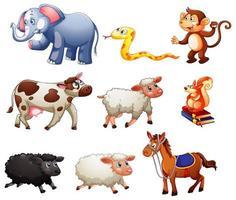 Conjunto de diferentes animales aislado sobre fondo blanco.