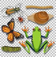 Set of different insects on transparent background