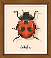 Ladybug or ladybird close up in wooden frame