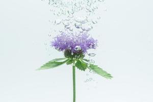 primer plano, de, un, flor morada, en el agua
