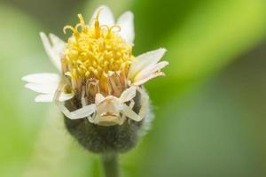 Spider on a flower, macro photo