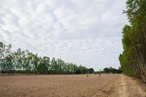 tierra cultivada en el campo