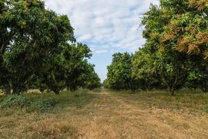 views of natural tree
