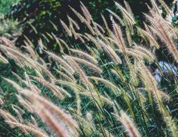 flores silvestres en un prado