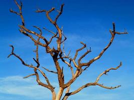 un viejo árbol marchito